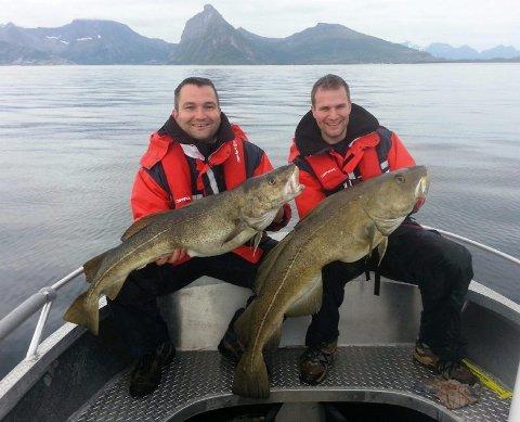 Stortorsk. Langs hele kysten av Steigen tas det til tider eventyrlige fangster av stor fisk. Fin torsk er det også å få. Foto: Privat