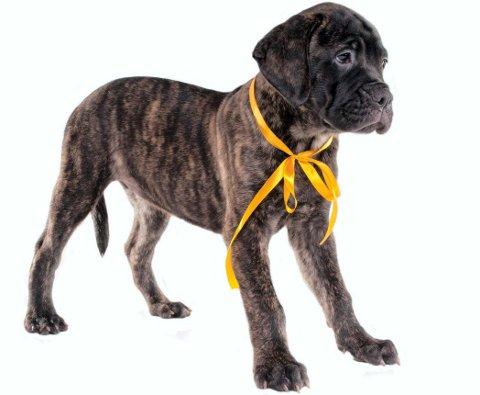 Kampanje: Hunder med gul sløyfe, gult bånd eller en gul rosett skal man ifølge kampanjen «Den gule hund» gi ekstra plass.Foto: Scanpix