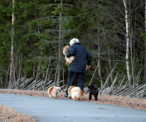 I flokk og følge: Følget på Eiktunet på vei mot skogen.