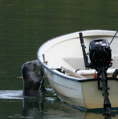 TOK OVER: Selen sendte båtens egentlige eier på bærtur.