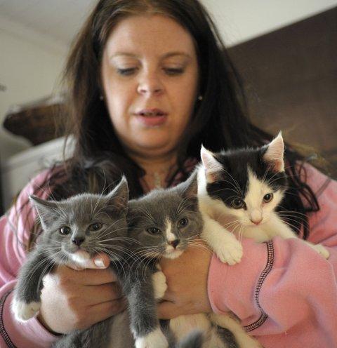 ETTERLATT: Disse tre krabatene trenger nye hjem etter at de ble etterlatt i hagen til Dyrebeskyttelsen. Helene Dahlen Halvorsen er midlertidig fostermor.