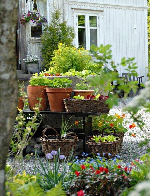 Kontroll: Tross mangfoldet, har hageeieren oversikt over alle plantene som finnes i hagen og hvor de er plassert.