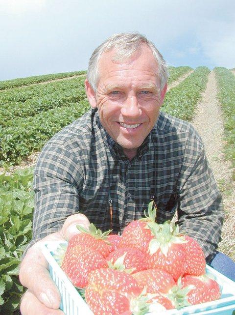Store og søte jordbær er klare for det lokale markedet. -De er rekordtidlig klare, sier Arne Green.