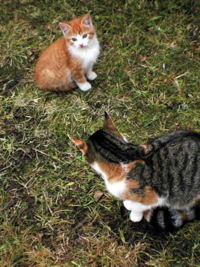 SMÅ OG STORE: Kattene er både små og søte, men de er ikke spesielt lette å komme innpå.
