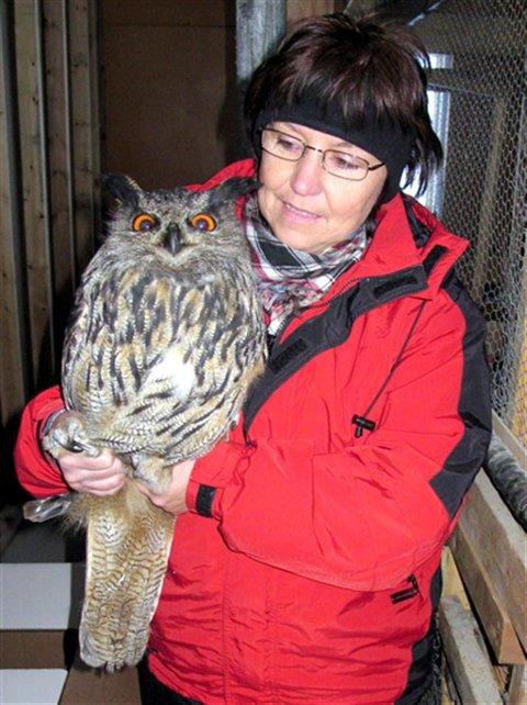 Første gang: Her er hubroen snart på vingene etter at Marita Sæter og Jo Heggset reddet den fra å fryse i hjel i jula 2010. Foto: Jo Heggset