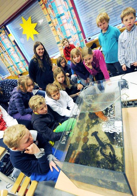 Med hummeren vel på plass er elevene nysgjerrige på hvordan den oppfører seg, og om den bruker hula som to av elevene har bygd til den.