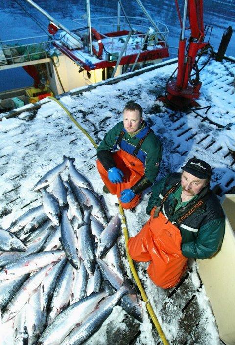 LAKS Seigarna var fulle av laks. Per Oddvar og Fred Isaksen rodde med 35 fotingen Ottarson på Kvænangen i går. - Fjorden er full av laks, sier Fred.