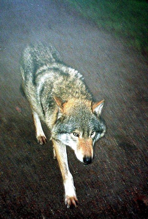 ETTERTRAKTET: Noen liker, mens andre avskyr dette dyret. FOTO: ANB
