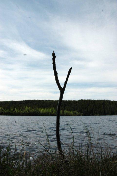 KULTURFISKE: Ei delt grein stukket ned i bakken ved Mørksjøen fungerer som stangholder under meitefiske. Det står mange slike langs vatna på åsen.