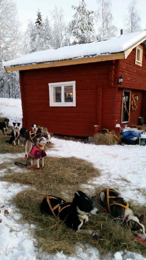 RØD STUGA: Her i Jokkmokk bor Nina Skramstad med sine 14 hunder. Foto: Nina Skramstad