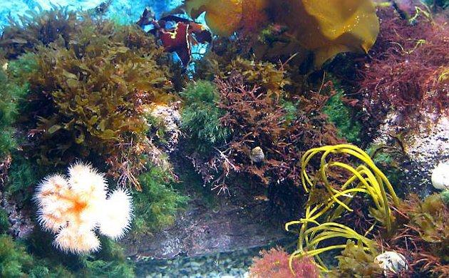 NY ATTRAKSJON: Kanskje får Florø akvarium, i gamle Meieriet Strandgata.
