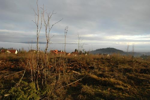 Riksantikvaren sier ja til bygging av boliger til tross for mange rydningsrøyser på Torke.