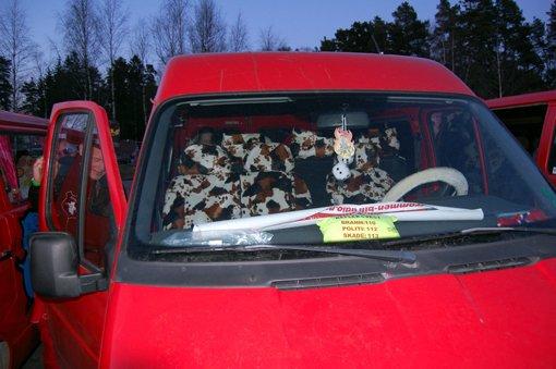 Howdy howdy: Ku-skinn i russebilen. Har snakker vi ekte russecowboys. ALLE FOTO: JONAS VÅRUM OLAFSEN