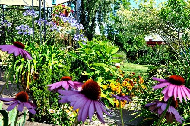 HAGE3: Gunnhild Monstad fra Tønsber er en av finalistene i Vestfolds vakreste hage. Vil du stemme på hennes hage, sender du TB HAGE 3 til 2303. Hver stemme koster 7 kroner. Foto: Kirvil Håberg Allum