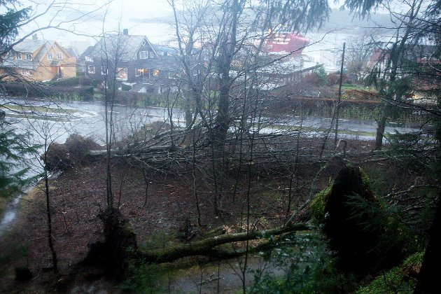 Øydeleggingar etter stormen Dagmar.
