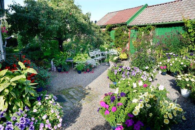 HAGE5: Else Hilde Kristiansen fra Larvik er en av finalistene i Vestfolds vakreste hage. Vil du stemme på hennes hage, sender du TB HAGE 5 til 2303. Hver stemme koster 7 kroner. Foto: Rebekka Westgaard