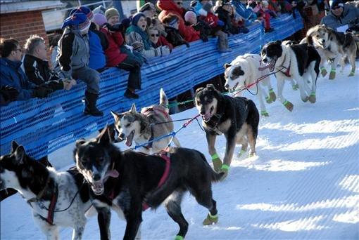Hundene var svært ivrige etter å komme i gang med løpet. Foto: Heidi Nilima Monsen
