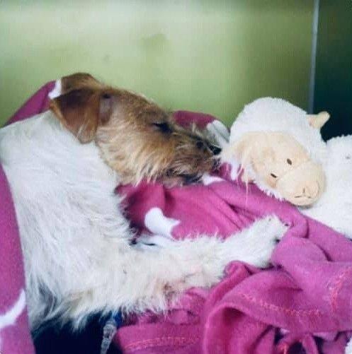 Klikk på bildet for å forstørre. bilde av skadd hund
