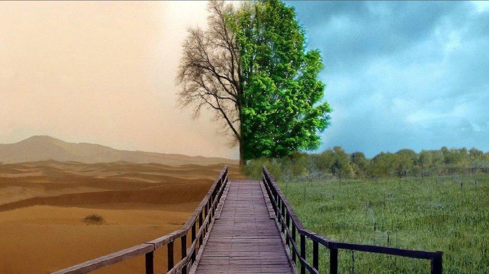 Klikk på bildet for å forstørre. GRØNT SKIFTE: Slik illustrerer Desert Control sin virksomhet. Frø kan bli sådd i løpet av syv timer etter at nanoleiren har blitt blandet inn i jorda, og planter kan vokse på områder der det tidligere har vært umulig for dem å vokse.