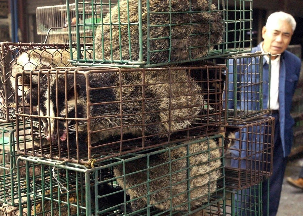 Klikk på bildet for å forstørre. FILE - In this Jan. 5, 2204, file photo, a man looks at caged civet cats in a wildlife market in Guangzhou, capital of south China's Guangdong Province, China. Nearly two decades after the disastrously-handled SARS epidemic, China's more-open response to a new virus signals its growing confidence and a greater awareness of the pitfalls of censorship, even while the government is as authoritarian as ever.