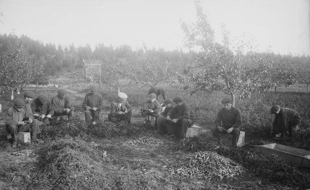Klikk på bildet for å forstørre. BASTØY SKOLEHJEM: fRA 1900 til 1970 ble øya Bastøy i Oslofjorden brukt som verneskole for gutter med tilpasningsvansker og atferdsproblemer eller som var rammet av omsorgssvikt. I dag er øya et fengsel for voksne.
