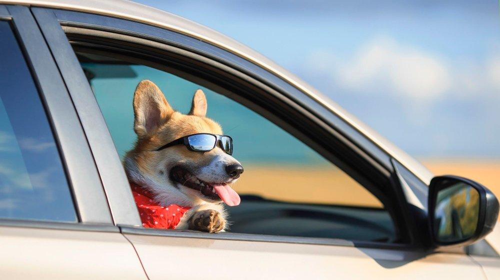 Klikk på bildet for å forstørre. Gode solbriller er viktig på tur.