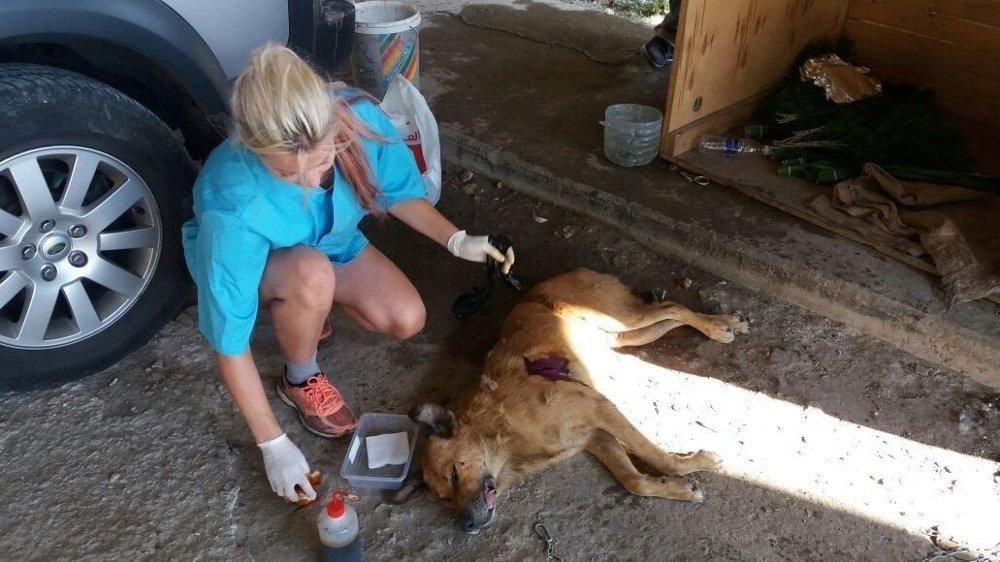 Klikk på bildet for å forstørre. Jeg syr sammen en hund som har fått et stygt sår. Ofte har man lite fasiliteter og utstyr ute i felten.
