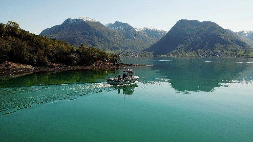 Klikk på bildet for å forstørre. Grønn Hardangerfjord