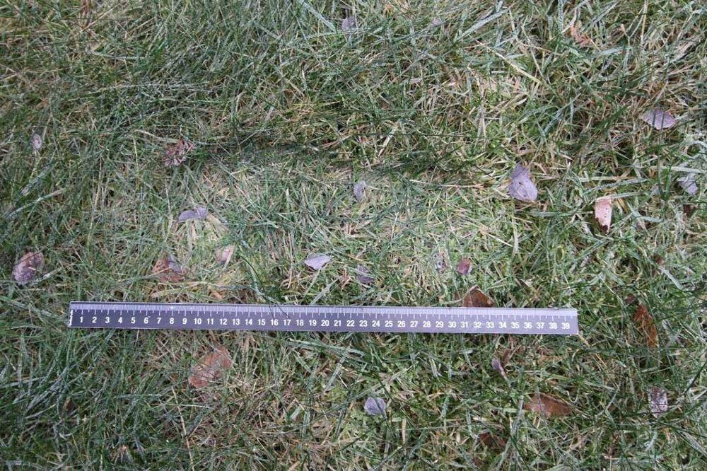 Klikk på bildet for å forstørre. Dette fotavtrykket ble funnet i gresset utenfor boligen til samboerparet Laila Anita Bertheussen og Tor Mikkel Wara.
