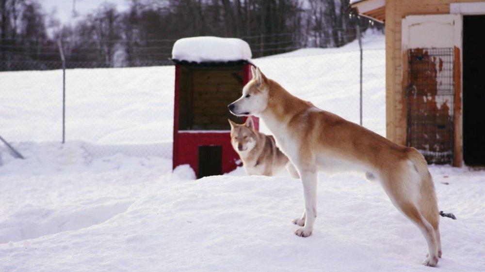 Klikk på bildet for å forstørre. HUNDEELSKERE: Brødrenes største frykt var å miste huset og hundene.
