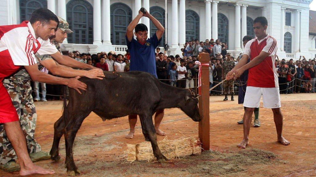 OFRES: 15 000 bøfler ofres i løpet av festivalen