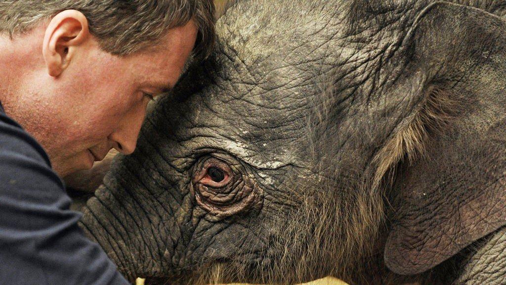 GOD JUL: Elefanten fødte i slutten av terminen, alt gikk bra og det ble en god jul i dyreparken i München.