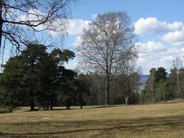 Mange ønsker at skogen skal forbli slik den er i dag, og ikke stappes full av faste installasjoner. Foto: Privat