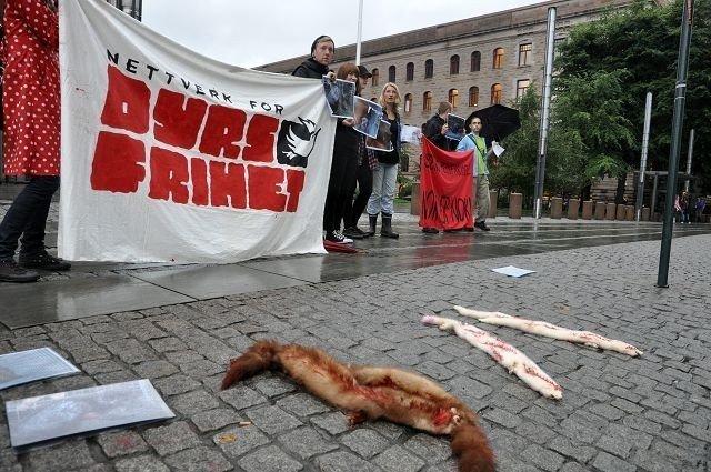 Nettverk for dyrs frihet demonstrerer mot pelsbransjen i krysset Prinsens gate/Akersgata. Foto: NFDF