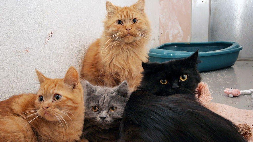 SMUGLEDE KATTER: Her er fire av de 28 smuglede kattene, slitne etter den grusomme bilturen.
