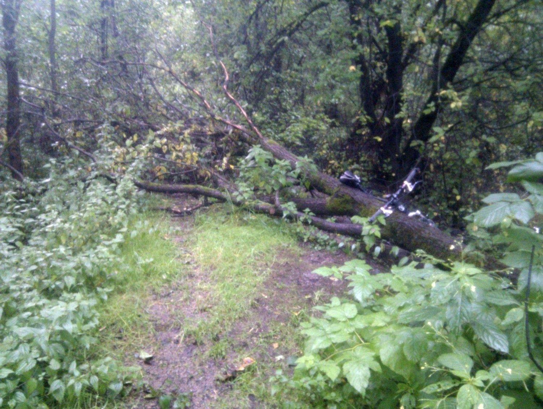BLIR LIGGENDE: Syklist Terje Fiskum har prøvd å få kommunen til å fjerne disse trærne som er falt over sykkelstien langs Alna. Uten å finne noen som tar ansvar.