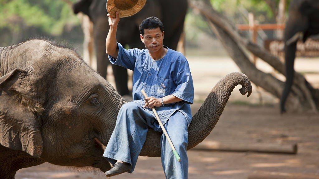 Står nærkontakt med elefanter på din må-gjøre-før-jeg-dør-liste?