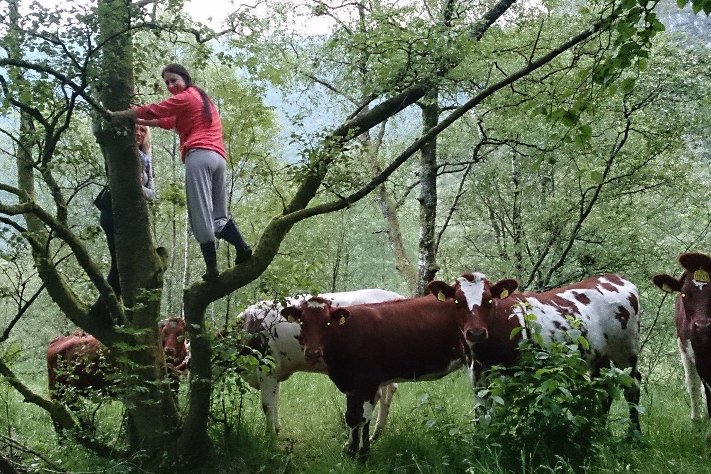 I dette treet vart Beate Haugland og Merete Haugsdal verande til hjelpa kom.