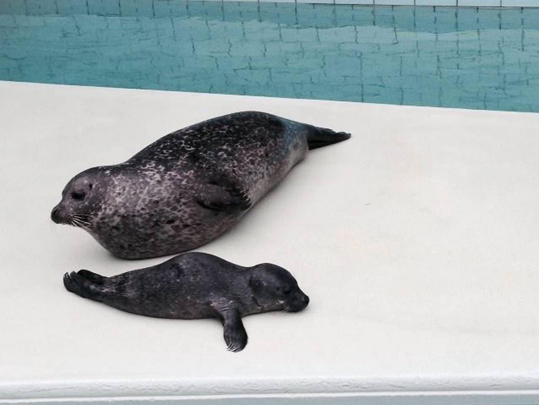 BABY: Selene Vitus og Selma på Akvariet har fått en liten baby natt til onsdag. Det kom som en gledelig overraskelse for de ansatte.