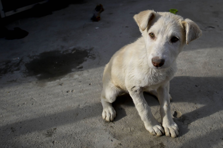 mattilsynet hunder