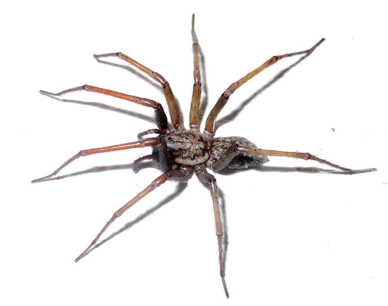 Hvor stor edderkoppen var, sier historien ingenting om. Men frykten er reell for den med araknofobi.