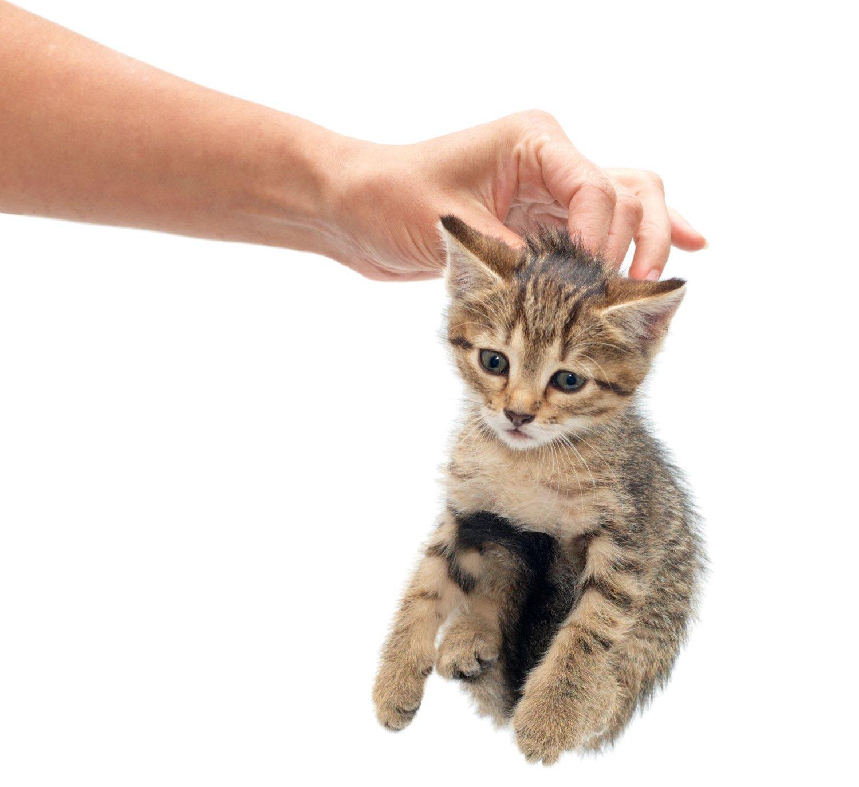 IKKE LOV: Nye krav til hold av familedyr gjør at det nå er definert som ulovlig å løfte en katt etter nakkeskinnet.