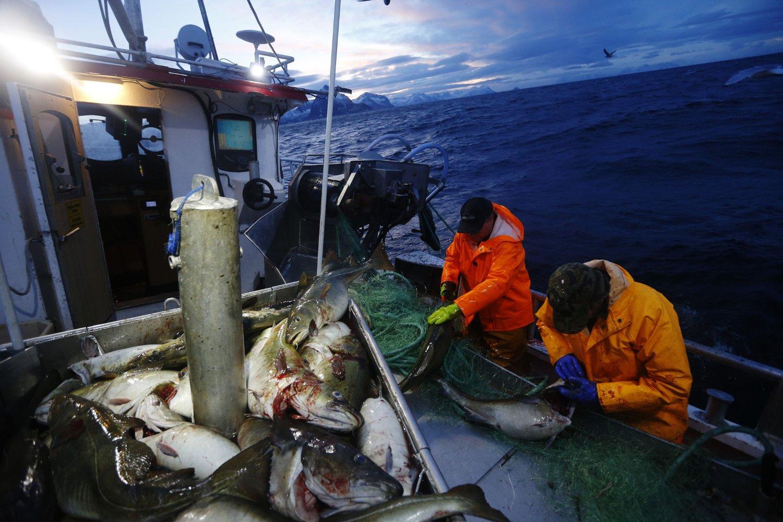Skreifiske på havet ved Gryllefjord på utsiden av Senja. Det årlige skreifiske starter i januar og varer til april.