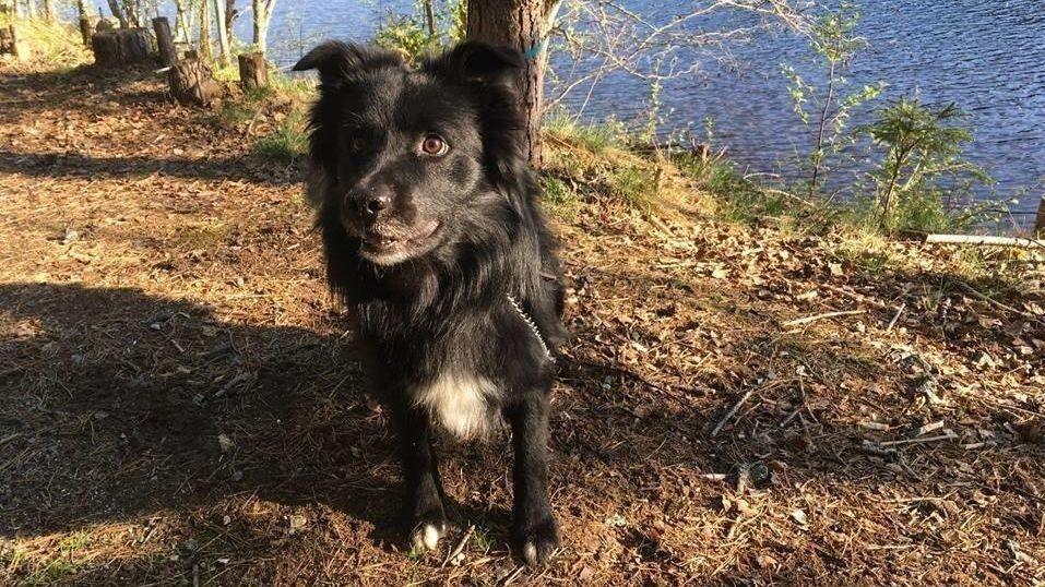 Politiet søker ny eier til hunden: Dersom du ønsker å komme i kontakt med politiet for om mulig å overta hunden, kan du ta kontakt på telefon 32805672 mellom kl 0830-1430