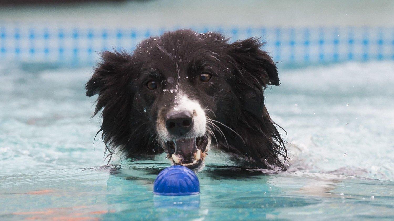 Vær forsiktig med å kaste ball til hunden. Den kan bli stresset i flere dager.