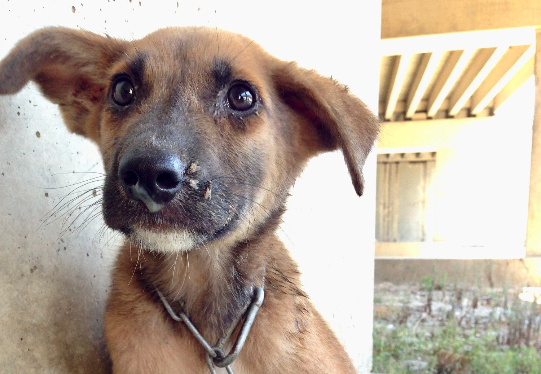 Hunder som lever under dårlige kår er mer utsatt for smittsomme sykdommer.