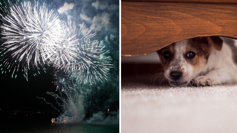 NYTTÅRSAFTEN: Den store festdagen er ikke like festlig for alle firbente.