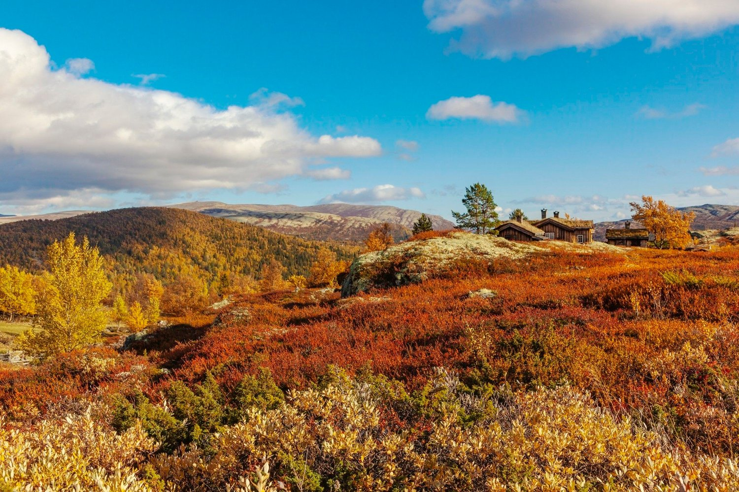 Rondane National Park with view to Mysuseter in autumn Kampesetrene in Rondane National Park with cottages and summer farms. View to Mysuseter.