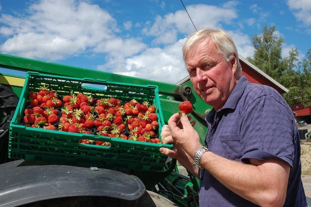 Bilde av jordbærbonde Geir Hæhre med kurver av jordbær