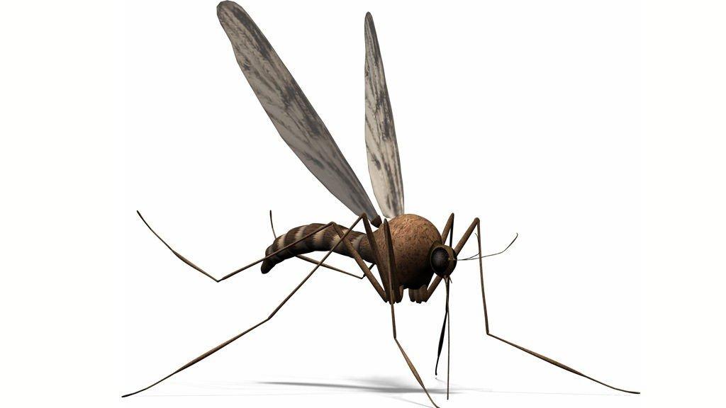 tips mot mygg